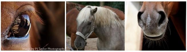 Paard en Trainingen