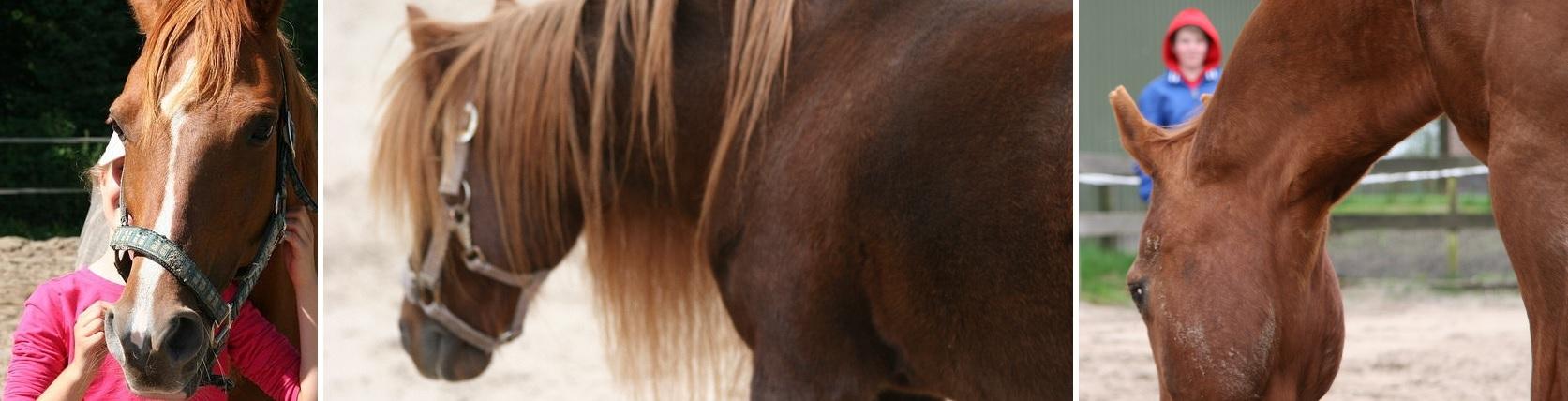 Paard & Gezin